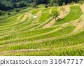 Ōyama Rice Terrace, senmaida, terraced rice-fields 31647717