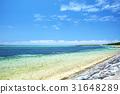 Bise Fukugi附近的海岸排行了樹 31648289