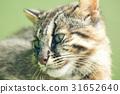 貓 貓咪 野貓 31652640