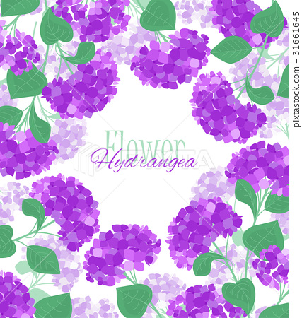 Vector hydrangea flower 31661645