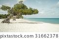 阿鲁巴 岛 海滩 31662378
