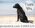 Dog At Sandy Beach, Text Thank You 31665325
