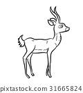 向量 向量圖 羚羊 31665824