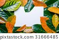 card,leaf,leaves 31666485