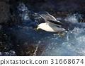 海鷗 乘飛機 海 31668674