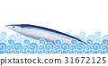 saury, pacific, pike 31672125