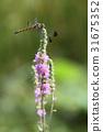 花 廠 植物 31675352