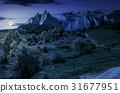 forest on grassy hillside in tatras at night 31677951