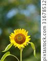 向日葵 花朵 花卉 31678512
