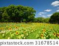 向日葵 世博会纪念公园 花园 31678514