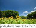 向日葵 世博会纪念公园 花园 31678515