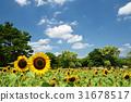 向日葵 世博会纪念公园 花园 31678517