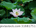 蓮花 花朵 花 31681751
