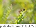 虫子 漏洞 昆虫 31684753