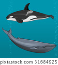 illustration of Blue whale and killer whale 31684925