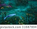 pond, lagoon, fish 31687894