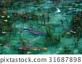 pond, lagoon, fish 31687898