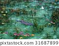 pond, lagoon, fish 31687899