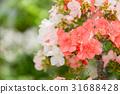 บอนไซ,ดอกไม้,ไม้ 31688428