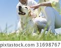 시니어 부부와 강아지 초원과 푸른 하늘 31698767