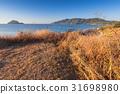 Dry grass on the coast of Zakynthos island 31698980