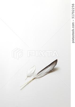 깃털 31702256