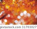 가을, 가지(나무), 단풍나무 31703027