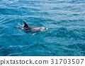 鯨魚 動物 海 31703507