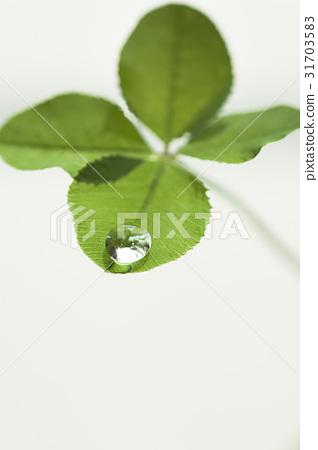 Four-leaf clover 31703583