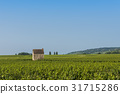Vineyard in Beaune with Little House 31715286