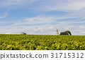 Vinyard with Tower and Tractor in Roque 31715312