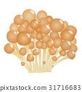 nameko, pholiota nameko, mushroom 31716683
