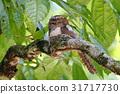 鸟 观察鸟类 喙 31717730