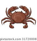 crab, top view 31720008
