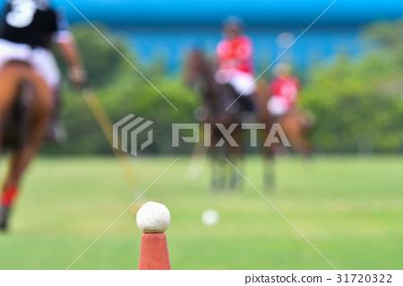 Polo horse ball 31720322