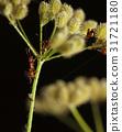 Ants teamwork 31721180