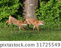 Kita狐狸的孩子们 31725549