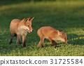Kita狐狸的孩子们 31725584