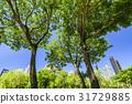 树木 树 公园 31729885