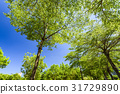 Green trees in the park 31729890