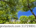 树木 树 牧场 31729891