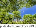 树木 树 公园 31729893
