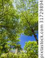 树木 树 成长 31729894