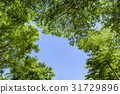 Green trees in the park 31729896