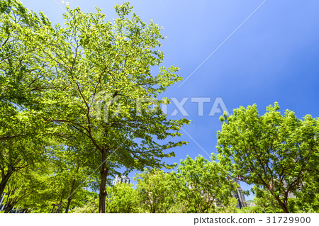 Green trees in the park 31729900