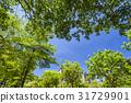 日光 阳光 树木 31729901
