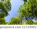 树木 树 成长 31729902