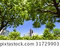 日光 阳光 树木 31729903