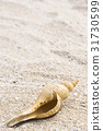 the shells isolated on beach 31730599