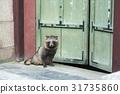 浣熊,昌德宫(历史遗址122),首尔钟路区 31735860